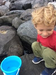 Petit poisson aux Açores
