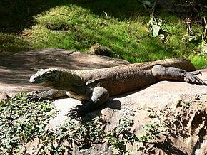 Indonésie Dragon de Komodo